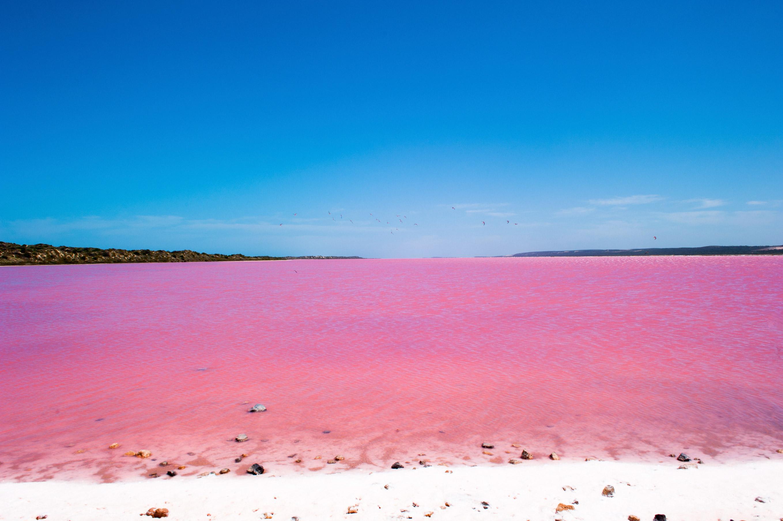 australia-pink-lake