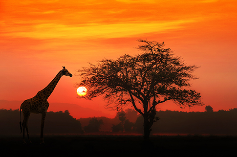 serengeti-park-places-to-visit-before-you're-30