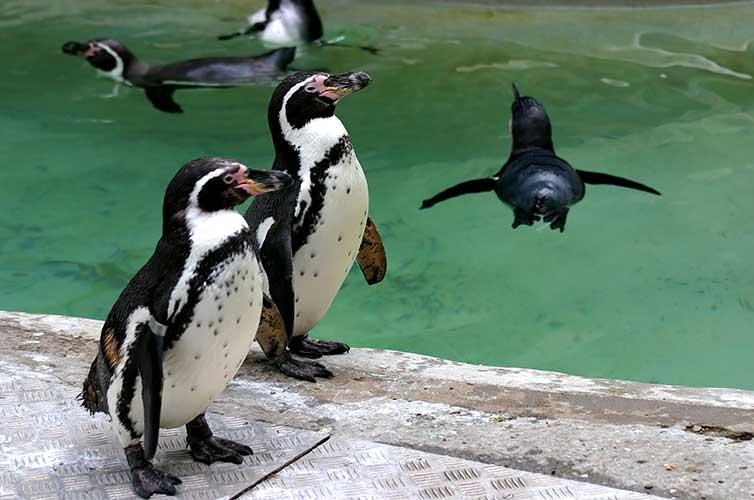 penguins at zoo